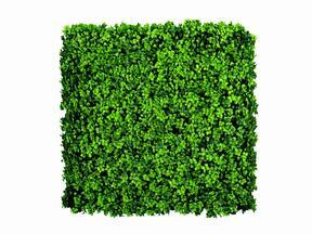 Panel ze sztucznego liścia Leucodendron - 50x50 cm