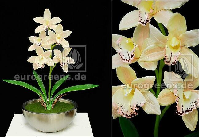 Roślina sztuczna Orchidea Cymbidium krem 50 cm