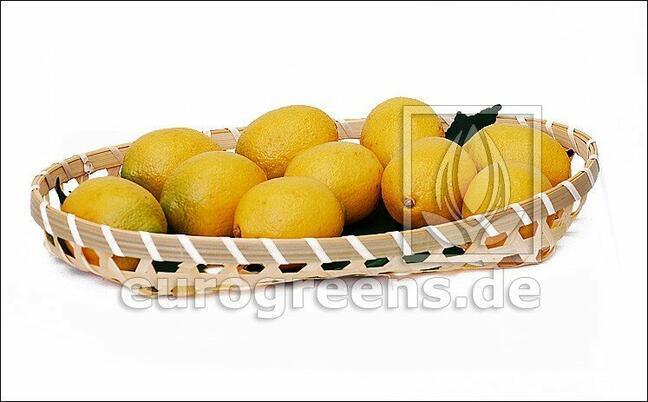 Sztuczna cytryna