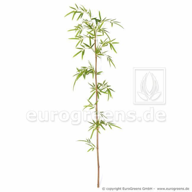 Sztuczna gałązka Bambus Japoński 150 cm