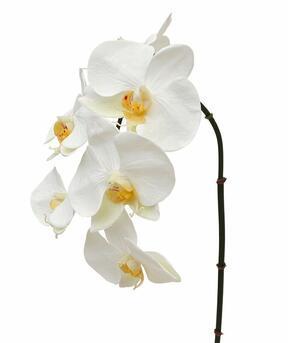 Sztuczna gałązka orchidei biała 55 cm