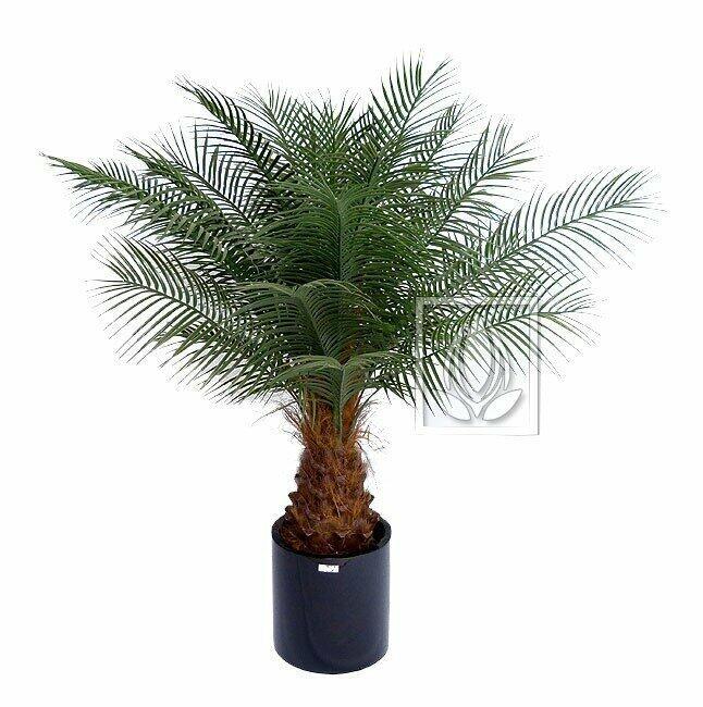 Sztuczna palma Data 170 cm
