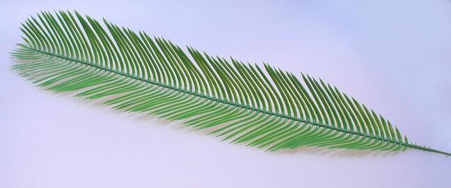 Sztuczna palma liściasta Cycas 80 cm