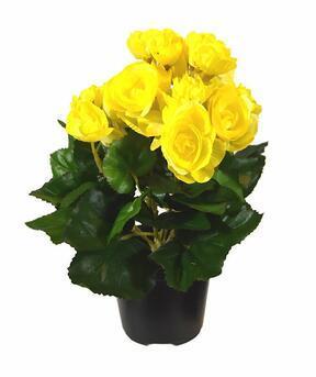 Sztuczna roślina Begonia żółta 25 cm