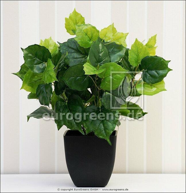 Sztuczna roślina Cisus 40 cm