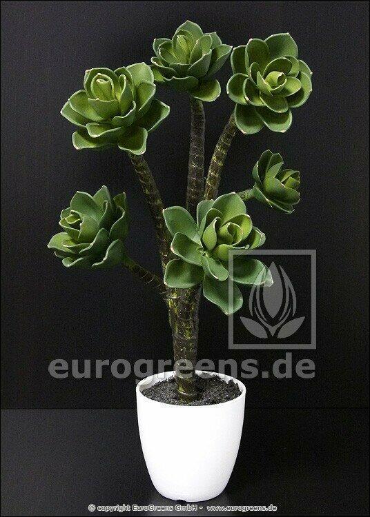 Sztuczna roślina Eševéria 55 cm