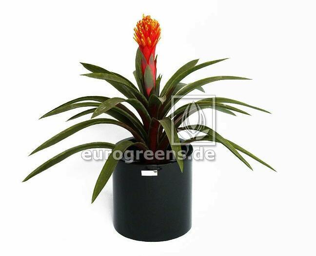 Sztuczna roślina Guzmánia 65 cm