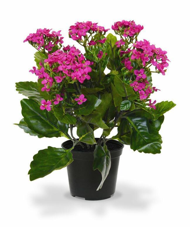Sztuczna roślina Kalanchoa fioletowa 30 cm