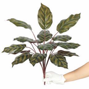 Sztuczna roślina Kalatea 50 cm