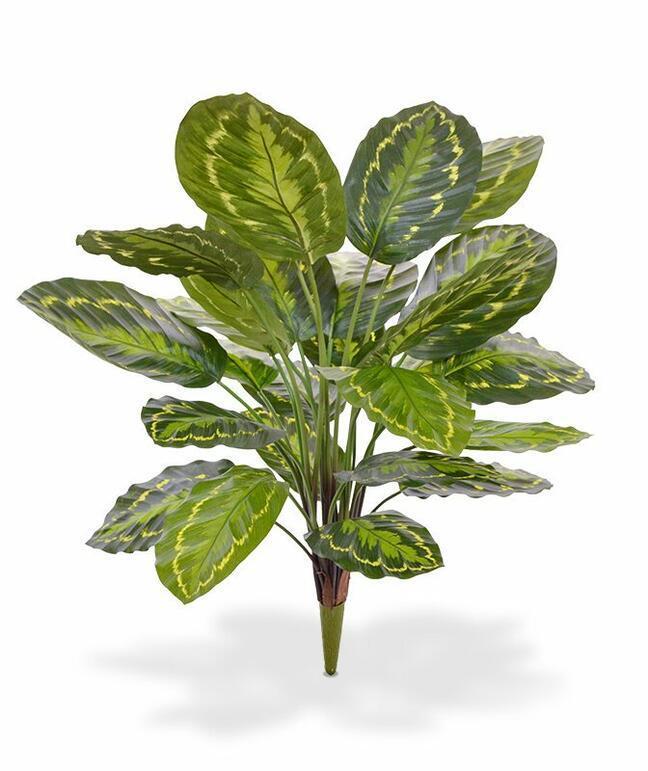 Sztuczna roślina Kalatea 65 cm