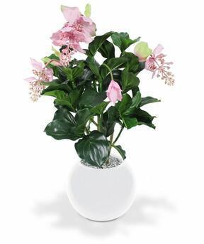 Sztuczna roślina Medinila piękna 100 cm