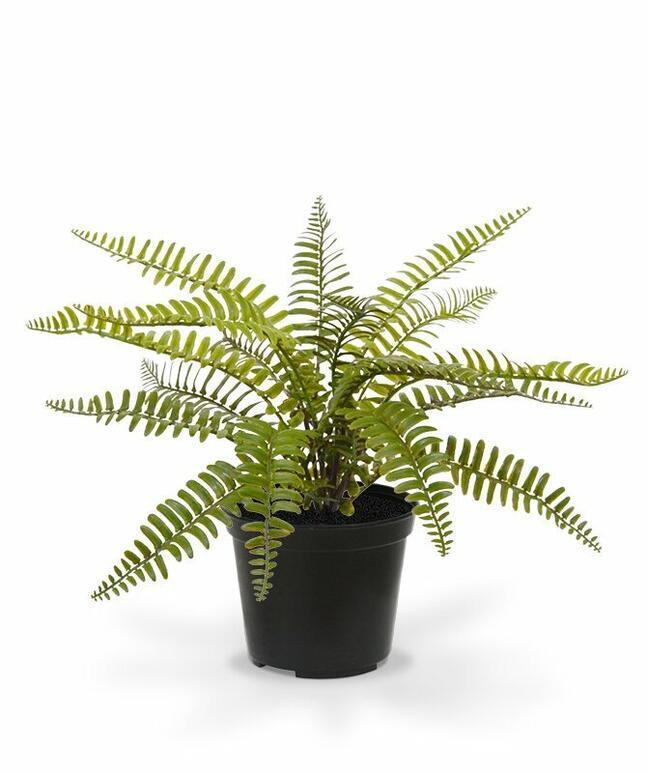 Sztuczna roślina Splenwort 35 cm