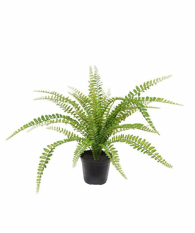 Sztuczna roślina Splenwort 45 cm