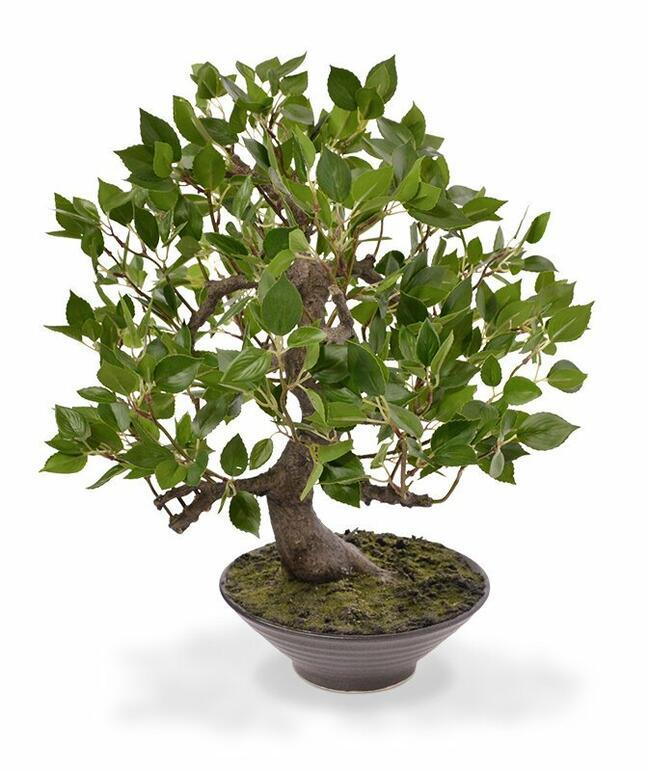 Sztuczne bonsai Fikus Wiandi 45 cm