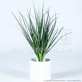 Sztuczne żłobienie wiązki trawy Trzcina pospolita 55 cm