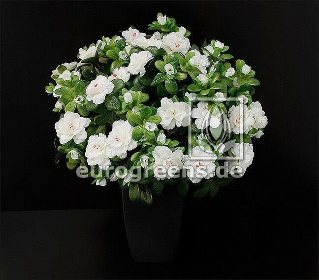 Sztuczny bukiet Belgijska Azalia biała 40 cm