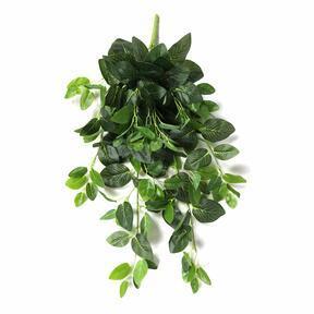 Sztuczny wąs Fitónia zielony 80 cm